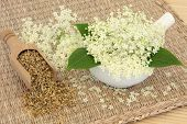 stock photo of meadowsweet  - Meadowsweet herb flowers dried and fresh used in natural alternative medicine - JPG