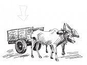 Cow carries a cart Hand drawn