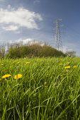 Power Line Over Meadow, Uk.