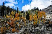 Fall Aspens and Granite Boulders