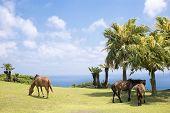 Seashore of horses