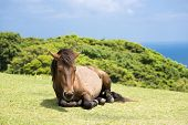 One horse sitting
