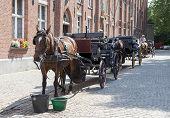 Horse Cart In Bruges, Belgium