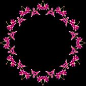 Border Frame Pattern of Bright Orchid plant isolated on black background
