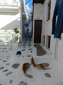 Chillin cats