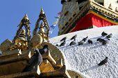 Birds And Stupa