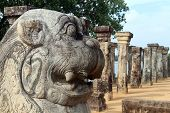 picture of polonnaruwa  - Head of lion and columns of palace Nissabnka Mala in Polonnaruwa Sri Lanka - JPG