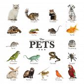 stock photo of petting  - poster of pets in English - JPG