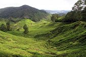 stock photo of cameron highland  - View of tea plantation in Cameron Highlands in Malaysia - JPG