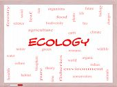 Ecology Word Cloud Concept On A Whiteboard
