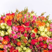 Bouquet of multicolored roses on white background