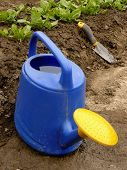 watering can against spinach bed