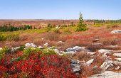 Dolly Sods West Virginia Autumn Landscape