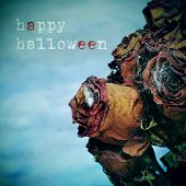 closeup of a bouquet of dried roses with cobwebs in a cemetery and the text happy halloween