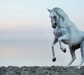 stock photo of wild horse running  - wild horse  - JPG