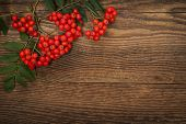 picture of mountain-ash  - Red mountain ash or rowan berries on rustic wooden background - JPG