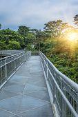 footpath in garden, Singapore Botanic Gardens.