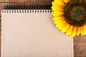 Beautiful sunflower with notepad on wooden background