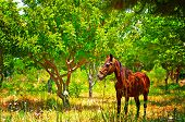 Digital Painting Of A Chestnut Horse Out Grazing In A Field