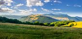 picture of row trees  - panoramic summer landscape - JPG