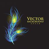 Vector two feathers peacock. Black background. Fashionable desig