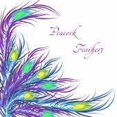 Vector feathers peacock. Color background. Fashionable design