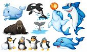 stock photo of aquatic animal  - Illustration of many kind of sea animals - JPG