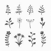 Set of floral graphic design elements with flowers, branches and sprouts