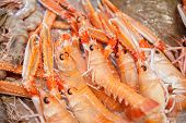 Detail Of Bunch Of Red Fresh Prawns In Fish Market