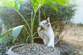pic of garden snake  - White cat fight green snake in untidy dirty garden danger - JPG
