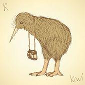Sketch Fancy Kiwi Bird In Vintage Style