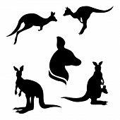 image of kangaroo  - Kangaroo set of black silhouettes - JPG