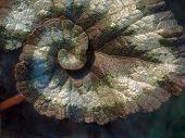 Escargot Begonia Leaf
