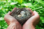 pic of human egg  - the man holding a nest with eggs - JPG