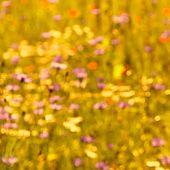 stock photo of pentecostal  - Defocused flower meadow in sunlight - JPG