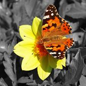 Red moth on flower on colorless background