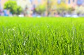 Lawn with green grass in city park