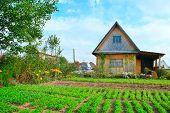 Cottage and garden plot