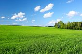 Meadow with green grass and trees under blue sky