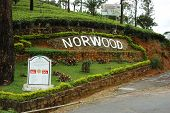 Norwood tea plantations in Nuwara Elliya,Sri Lanka