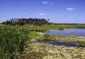 Wetlands Textures