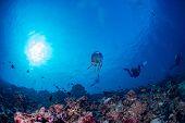Постер, плакат: Jellyfish In Maldives Corals And Fish Underwater Panorama
