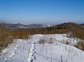 In The Winter In Mountains Sihote-alin