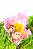 Easter Eggs In Flower Of Tulip