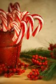 Candy canes in  a red old tin can with berries and pine/ Soft focus