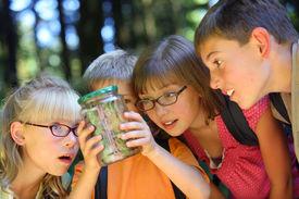picture of school child  - Children looking at bug in jar - JPG