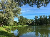 The Moment In The Summer In The City Park, Green Trees, Willow, Pond, Clear Sky, The Shore Is Covere poster