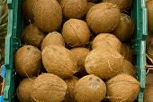 A Lot Coconuts In The Supermarket. Many Coco Lying In A Boxes. Top View. Mock Up.copy Space. poster