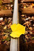 Leaf Lying On The Railway