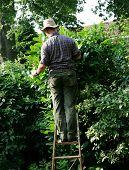 Gardener Up Ladder